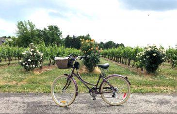 Passear de bicicleta por vinículas-blog-cmoestv